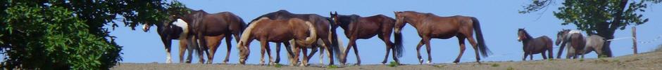 Beistellpferde